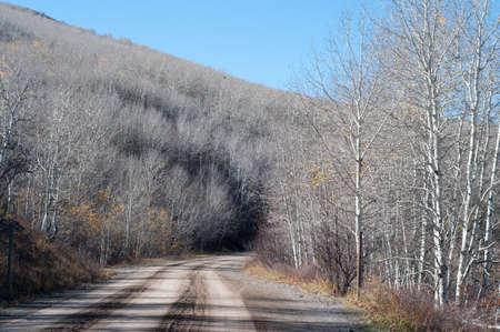 Aspens feuilles le long de la route à Vega Lake, Colorado