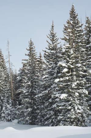 Snow on western Colorado Stock Photo