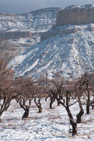 D'hiver près de Palisade, Colorado Banque d'images