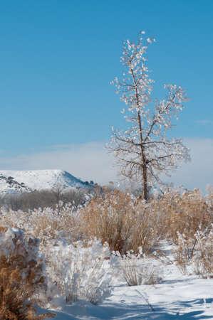 Desert neige