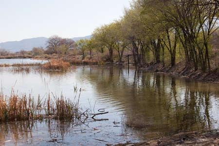 Les zones humides près de la rivière Colorado dans le Grand Valley, CO