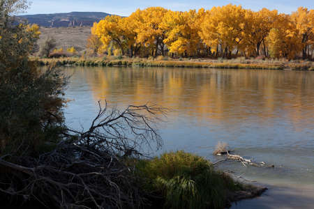 A new multipurpose path skirts the bank of the Colorado River near Fruita, Colorado. Its always a beautiful walk or bike ride, but its spectacular when the colttonwoods turn gold.