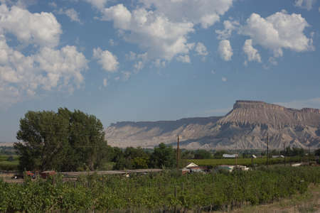 Sunny summer day near Palisade, Colorado. Mt. Garfield with vineyards in the foreground. Stock Photo