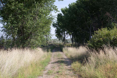 Unpaved dirt road  in countryside
