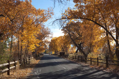 Paved country road in autumn