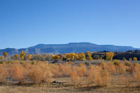 Golden cottonwoods, willows, and other brush set off the blue slopes of the Grand Mesa as seen from the Grand Valley near Clifton, Coloraod in autumn Stock Photo