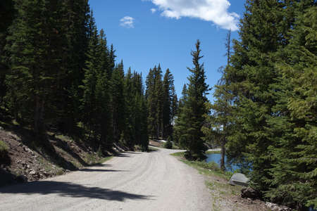 In this horizontal summer photograph, a gravel road heads through an evergreen forest. Stock Photo