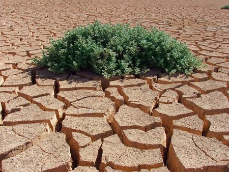Green plant is grown on cracked earth. photo