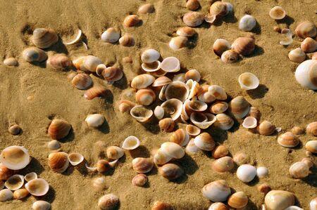Close up of wet shells on sea coast photo