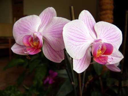 Close-up of flower of pink orchid.  Stock Photo - 4961298