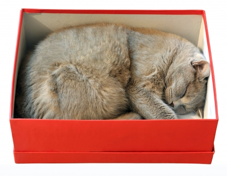 Cat sleeping in red shoes box isolated on white background photo