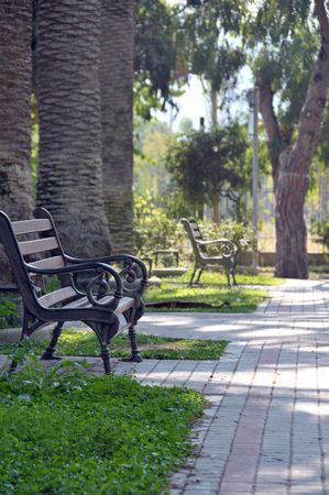 Park with line of palms and bench on a side. Stock Photo