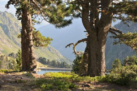 View of two pines with mountains and lake in the background