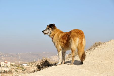 Close-up of patrol dog on sky background Stock Photo