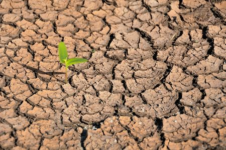 Close-up of small sprout growing on cracked earth.