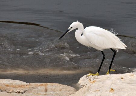 Close up view of a white heron standing in water