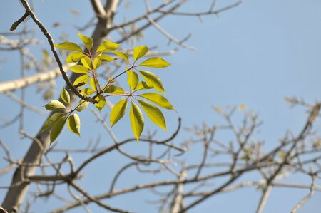 Close up of new leaves of a plant on blue sky background Stock Photo