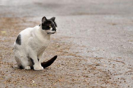 Close-up of a street cat sitting on a sidewalk