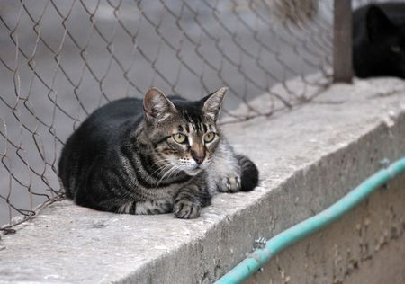 Close-up of a street cat lying on a wall.