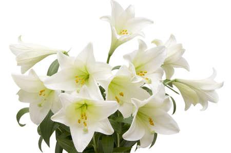 Closeup of lilies