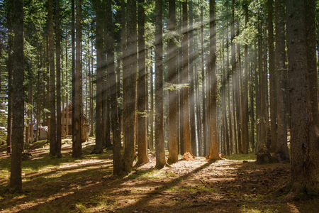 View of a forest with sun rays passing through trees