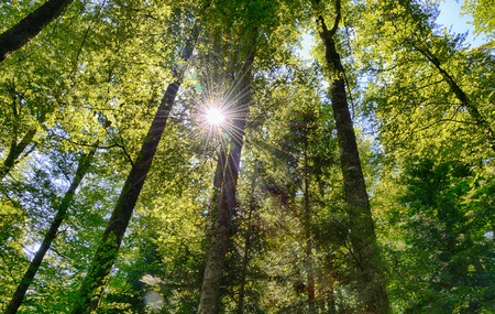 View a forest with sun spot and blur through the trees Фото со стока