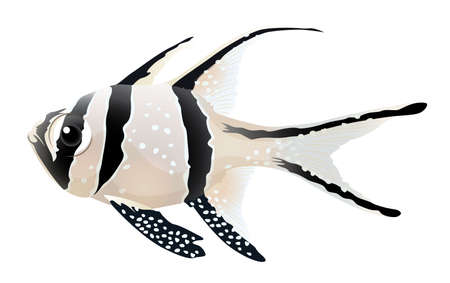 Illustration of a Banggai cardinalfish - Pterapogon kauderni Stock Vector - 15914862