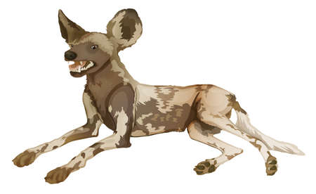 lycaon pictus: Illustration of an African wild dog  Lycaon pictus