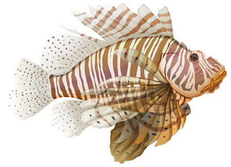 exotic fish: Illustration of a lionfish - Pterois  genus  Illustration