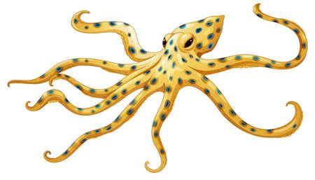 octopus: Illustratie van een blauw-geringde octopus Hapalochlaena lunulata