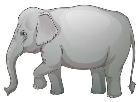 big size: Illustration on an Asian elephant (Elephas maximus)