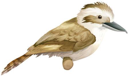 aves: Illustration of a laughing kookaburra - Dacelo (genus)