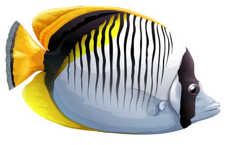 chaetodon: Illustration of a Spot-naped Butterflyfish (Chaetodon oxycephalus) Illustration