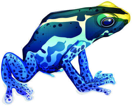 Illustration of a poison dart frog (Dendrobates tinctorius) Vector