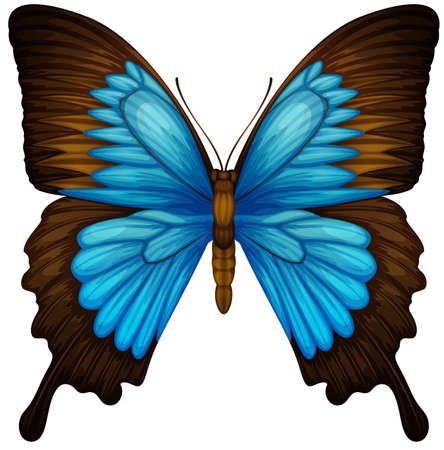 butterfly background: Illustration of a Blue Mountain Swallowtail butterfly - Papilio ulysses Illustration