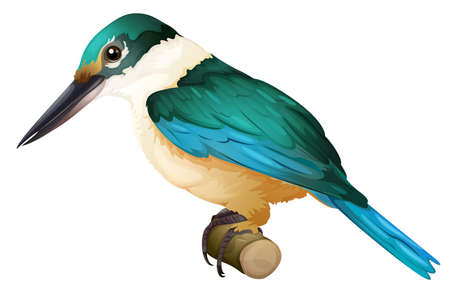 Illustration of a Sacred Kingfisher (Todiramphus sanctus) Vector