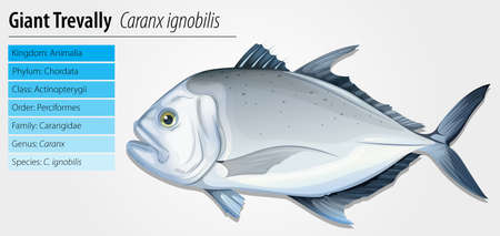 species plate: Illustration of a giant trevally (Caranx ignobilis)