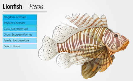 species plate: Illustration of a lionfish - Pterois antennata Illustration