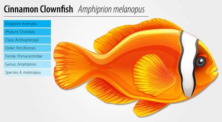 Cinnamon clownfish - Amphipn melanopus Stock Vector - 15915229