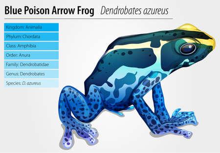 rana venenosa: Ilustración de una rana venenosa (Dendrobates tinctorius)