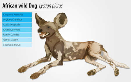 species plate: Illustration of an African wild dog - Lycaon pictus