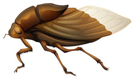 langosta: Ilustración de un Cicadidae en un fondo blanco
