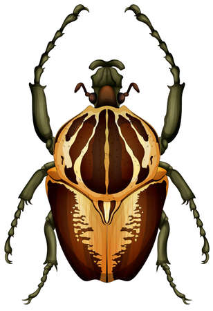 Illustration of a Goliathus regius beetle on a white background Çizim