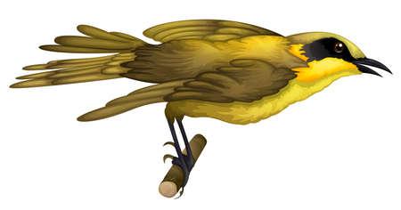animalia: Illustration of a Lichenostomus melanops on a white background Illustration