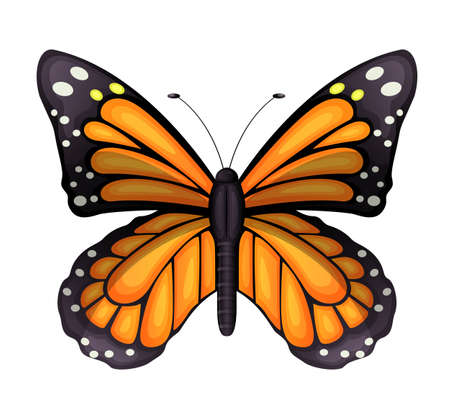 insecta: Illustration of a Danaus plexippus on a white background