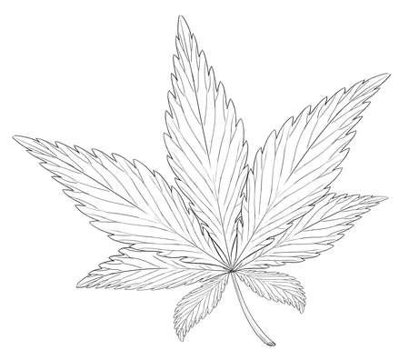 narcótico: Ilustração da folha da Cannabis sativa Ilustração
