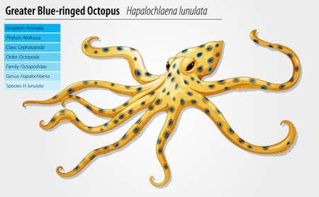 organisms: Blue-ringed octopus - Hapalochlaena lunulata species