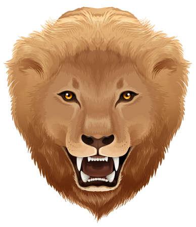 dangerous: Lion illustration - species Pathera leo
