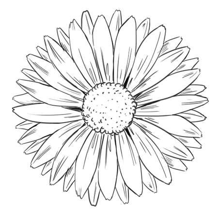 outline flower: Illustration of petal arrangement of a flower