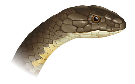 snake head: Illustration of a snake head (profile)